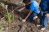 DSC_8707-2 (katr.in) Tags: garden gardening permaculture forest nature denmark pinetrees forestgarden