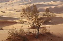 Sahara Desert الصحراء (Mohammed Almuzaini) Tags: رمال طبيعة صحراء nature dunes bush arabia desert sand sahara