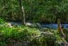 By the creek (Todorovic Srecko) Tags: sokobanja sokograd dodjes star odes mlad canon wide wideangle canon1200d 1018 suma potok reka banja priroda landscape pejzaz voda srbija serbia balkan europe nature eos t5 ngc