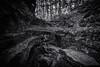 The Entrance (black) (Sine--Qua--Non) Tags: landscape landscapes nature outdoors statepark mccormickscreek indianastateparks indianalandscape indianalandscapes hdr hdrlandscape subtlehdr blackwhite blackandwhite bw monochrome bwhdr blackandwhitehdr indiana wolfcave cave caves