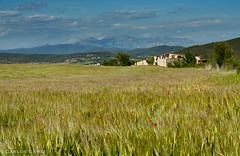 170507_3834-2048w.jpg (Carlos Gámiz) Tags: amapolas paisaje versiones montserrat flores lallacuna barcelona españa es