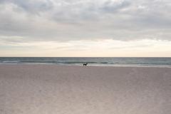 Glenelg SA, 2017 (jamiehladky) Tags: glenelg sa southaustralia adelaide australia coast beach waves canon digital 5diii jamiehladky hladky dog sunset sundown cloudy landscape