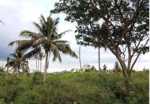 Hua Hin: Bauland für Ihre Traumvilla in Hua Hin auf dem herrlichen Hin Lek Fei Plateau