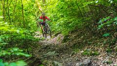 2017.05.25 Borsberg-6 (Michael_Topp) Tags: sony nex 3 baum wald dresden mountainbike fahrrad licht