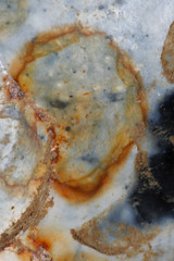 Pareidolia (Arkle1) Tags: pareidolia macromondays