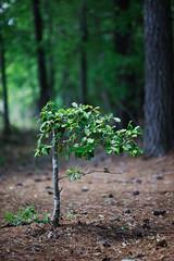 walk about Harris Lake 41 (furrycelt) Tags: harrislake newhillnc nikon85mmf14afd nikon85mmf14 northcarolina shearonharrisreservoir ianwilson jianwilson photographersoftumblr 85mm d600 nikon forest furrycelt lake lensblr natural nature trees water woods