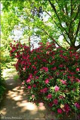 DSC_8815 (facebook.com/DorotaOstrowskaFoto) Tags: ogródbotaniczny kwiaty powsin warszawa