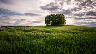 Some trees...(explored)