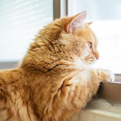 bird?? (ChCh Chen) Tags: cat cats kitten kitty kittens lifes lifestyle sony zeiss 50mm