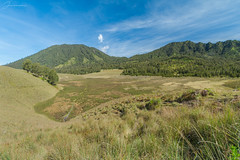 Oro-oro ombo (jenvendes) Tags: indonesia asia semeru mount mountain summit top high place hiking camping adventure trip trees highest java nationalpark popular morning shadow light pines cool beautiful landscape oro ombo