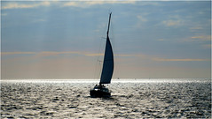 Sailing Home (Hindrik S) Tags: sailing boat ship sail seil segeln zeilen zeil zeilboot sylboat water wetter wasser sea see waad waadsee waddenzee light ljocht licht clouds wolken evening jûn avond abend fryslân friesland netherlands niederlande nederland sonyphotographing sony sonyalpha a57 α57 slta57 tamron tamronaf16300mmf3563dillvcpzdmacrob016 16300 2017