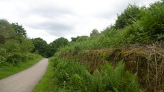 Retaining Wall, Miners Arms Bridge, Poynton  (Marple - Macclesfield  old railway) (dave_attrill) Tags: retainingwall minersarmsbridge poynton disused railway line trackbed path mslr cheshire beeching rose hill cycle report cuts closed 1970 opened 1869 june 2017 middlewoodway