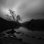llyn padarn lake tree thumbnail