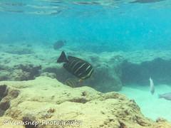 Hanauma Bay 1 (venusnep) Tags: hanaumabay hanauma bay underwater tropicalfish tropical fish iphone watershot watershotpro hawaii snorkeling travel travelphotography may 2018