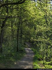 20160512_2 Grey trail through spring forest | Råda, near Gothenburg, Sweden (ratexla) Tags: spring forest 12may2016 2016 canonpowershotsx50hs råda gothenburg göteborg goteborg nature sweden sverige scandinavia scandinavian europe landscape scenery scenic nordiccountries norden skandinavien beautiful earth tellus skog vår vårskog trees green woods photophotospicturepicturesimageimagesfotofotonbildbilder våren hiking hike mölnlycke trail trails path paths favorite