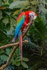 Guacamaya (Augusto Silva Otero) Tags: aves cali colombia guacamayos naturaleza valle zoológicos