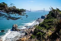 Low Tide (San Francisco Gal) Tags: sanfrancisco landsend goldengatebridge lowtide rock cliff tree ggnra pacific ocean water wave