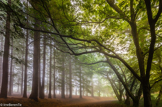 When the mist is whispering