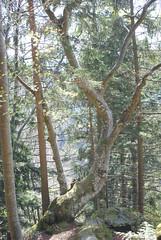 Pohorski pesniški odklop 2017 (Gregor G.) Tags: odklop pesemsi poezija pohorje pajkovdom