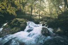 Steep Creek (Davide Arizzi) Tags: 2017 bergamo bosco forrest green italia moiodecalvi orobie outdoor trekking vallebrembana water wood