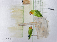 May daily challenge 23 - A Bird (chando*) Tags: aquarelle watercolor croquis sketch