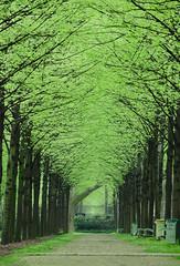 Tree tunnel (David Khutsishvili) Tags: davitkhutsishvili dkhphoto nikond5100 nikon 55200mm tree tunnel bercy 500px instagram perspective paris france