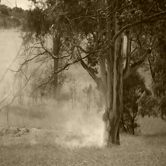 May Fire (the hopeful pessimist) Tags: fire sepia monochromatic outdoor farm nature tree country gum australia smoke bush bushland square branches burnoff natur