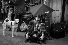 shelter together (Silver Machine) Tags: winchester hampshire streetphotography street streetportrait candid sitting dog couple rain umbrella raining morrisdance outdoor people fujifilm fujifilmxt10 fujinonxf35mmf2rwr blackwhite bw mono monochrome