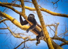 monkey (Isai Hernandez) Tags:
