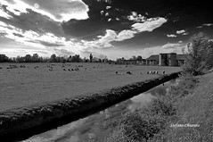Countryside. (stefano.chiarato) Tags: countryside campagna lombardia italy bw naturalmente natura acqua immaginidalnord