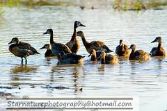 _DJA3454 copy (naturephotographywildlife) Tags: kruger wildlife scenery animals birdlife a99ii africa park