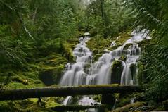 Sept 6, 2013 Upper Proxy Falls (11) (Dale Gerdes) Tags: oregon upperproxyfalls waterfall waterfalls