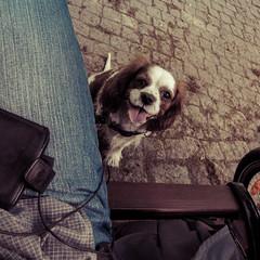 Le Croissant (.Dirk) Tags: berlin canons95 street dog hund chien croissant schöneberg