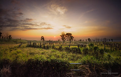 Out to pasture (Traylor Photography) Tags: mountainside panolo hawaii sunset nature coral clouds cowboy waikaloavillage southkohala panorama livestock grass fence landscape farm ranch bigisland catlle barbwire waimea unitedstates us