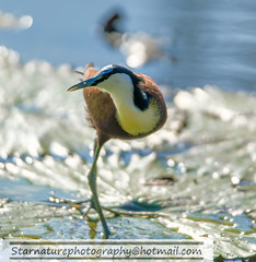 _DJA3699 copy (naturephotographywildlife) Tags: kruger wildlife scenery animals birdlife a99ii africa park