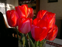 2017-04-02-8392 (vale 83) Tags: tulips nokia n8 friends coloursplosion autofocus