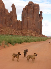 Land of Navaho or land of dogs? (Monument Valley 2012) (VauGio) Tags: navaho monumentvalley usa cani dogs cowboys canon powershot s