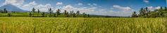 IMG_0632 (Ela&Piotr) Tags: bali indonesia indonezja jatiluwih ricefields