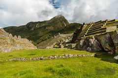 Machu Picchu -_DSC0656