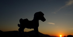 Καληνύχτα! ~ Good night! (Argyro...) Tags: silhouette sunset horse hmm macro
