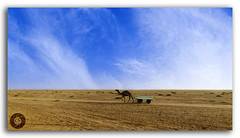 Sand, Sun and the Camel at great Rann of Kutch! (FotographyKS!) Tags: rannofkutch kutch salt landscape beautiful calm colorful desert lake nature outdoors scene camel ride tourism tourist wheel scenic season serenity summer travel water cracks earth land crust dirt patterns saltpans texture saltylandscape whitedesert thardesert gulfofkutch background beach leisure outdoor sunset dawn parchedland dusk sunrise clouds gujarat india