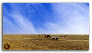 Sand, Sun and the Camel at great Rann of Kutch!