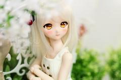 リリィちゃん (TURBOW) Tags: doll toy dollfie volks dollfiedream dd minidollfiedream mdd ddh10 semiwhiteskin sws wdsfaceup