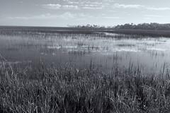 Salt Marsh-SC  2015-12-28_022 (hernanvazquezphotos) Tags: palmcoast southcarolina usa