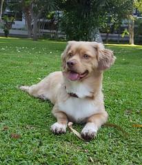 Roni (Santiago Stucchi Portocarrero) Tags: roni perro can cane dog hound chien santiagostucchiportocarrero hund