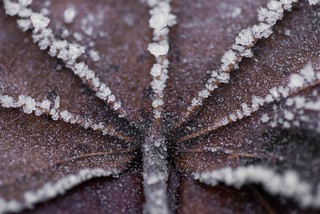 Frosty morning - Norwegian winter - dec 2016