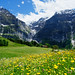 20170607-50-Wildflowers in the Alps