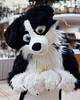 Eurofurence 2016 (Deeragon Entertainment) Tags: luka border collie dog fursuit fursuiter fursuiting furry ef22 eurofurence 2016