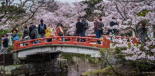 2017 - Kamakura - Tsurugaoka Hachimangu Shrine - 9 of 9