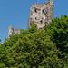 Burgruine Drachenfels 2